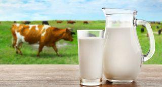 αγελαδινό γάλα - μύθοι και πραγματικότητες για την επίδραση που έχει στην υγεία μας