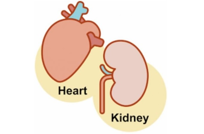 heart-and-kidney.jpg